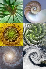 5.golden-ratio-in-nature